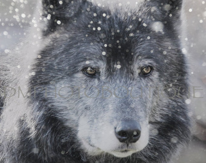 Wolf Notecards, Wolf, Gray Wolf Notecards, Wolf Gift, Wolf Greeting Cards, Nature Notecards, Winter Wolf Notecards, Gray Wolf Greeting Cards