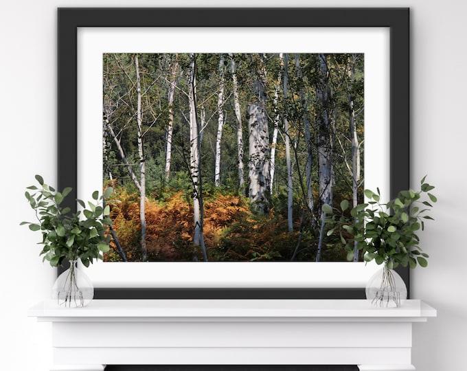 Birch Tree Print, Birch Tree Wall Art, Birch Tree Art, Birch Tree Photography, Birch Tree Canvas,Birch Tree Artwork, Aspen Tree Wall Art