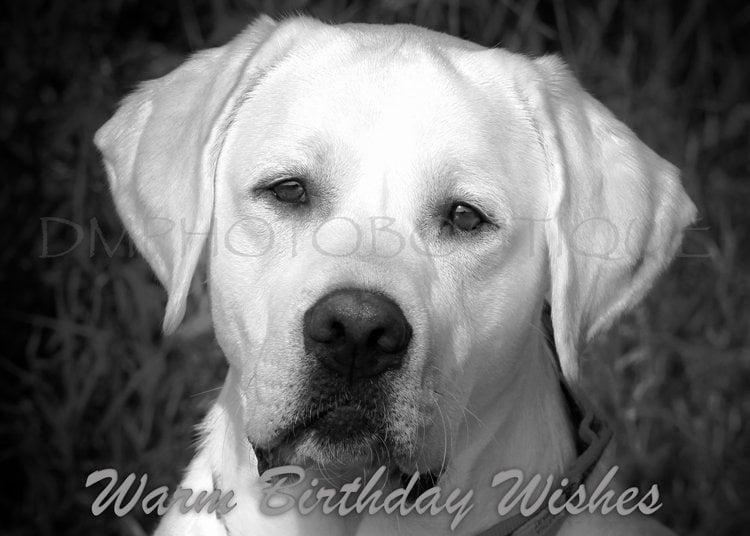 Labrador Retriever Lab Birthday Card Dog Lover Yellow