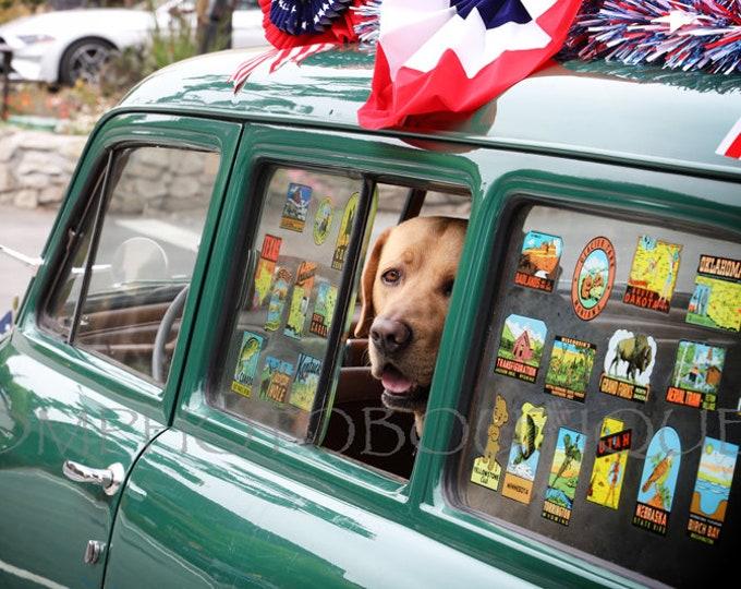 Labrador Retriever Print, Labrador Retriever Photo, Labrador Retriever, Lab Print, Lab Photo, Yellow Lab, Yellow Lab Print, Lab, Dog