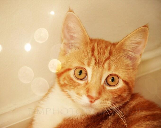 Cat Print, Cat Photo, Cat Art, Cat Artwork, Orange Cat Print, Orange Cat Photo, Orange Cat Canvas, Cat Art Print, Cat, Orange Cat, Cat Lover