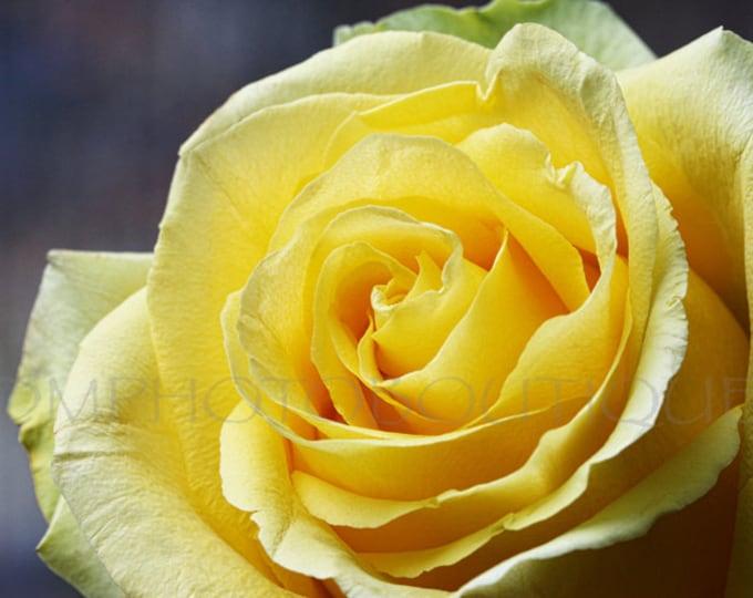 Yellow Rose Print, Rose Print, Flower Photo, Flower Photography, Flower Canvas, Rose Decor, Wall Decor, Flower Notecards, Rose, Rose Canvas