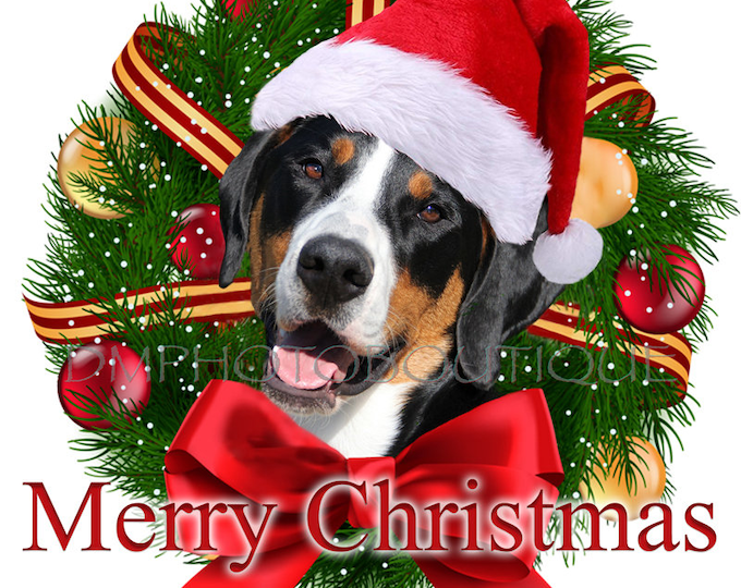 Greater Swiss Mountain Dog Christmas Cards, Greater Swiss Mountain Dog Holiday Card, Swissy Christmas Card, Swissy Holiday Card, Swissy