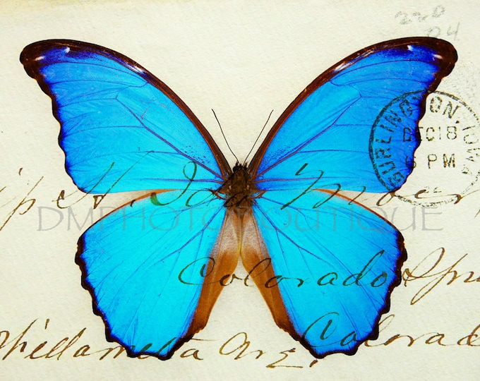 Vintage Butterfly Print, Vintage Butterfly Photo, Vintage Butterfly, Butterfly, Butterfly Print, Butterfly Decor, Butterfly Wall Art