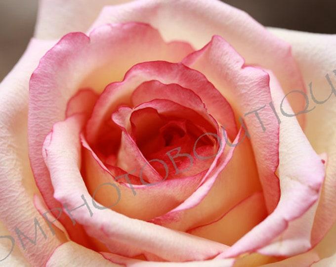 Rose Print; Notecards, Rose Photo, Rose Art, Rose Artwork, Flower Print, Flower Photo, Flower, Flower Art, Flower Artwork