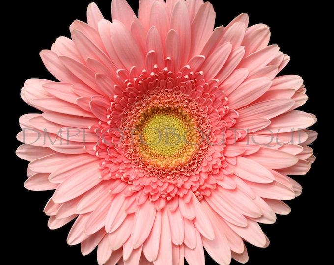 Daisy Canvas, Daisy Print, Daisy Photo, Gerbera Daisy, Daisy Photography, Daisy Decor, Flower Print, Daisy Wall Art Print, Daisy Wall Decor