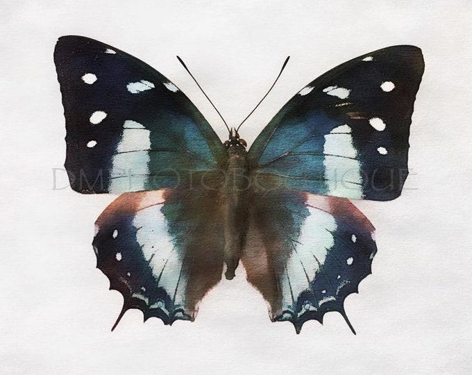 Butterfly Print, Butterfly Photo, Butterfly Art, Butterfly Wall Art, Nature Art, Butterfly Decor, Butterfly Wall Decor, Butterfly Notecards