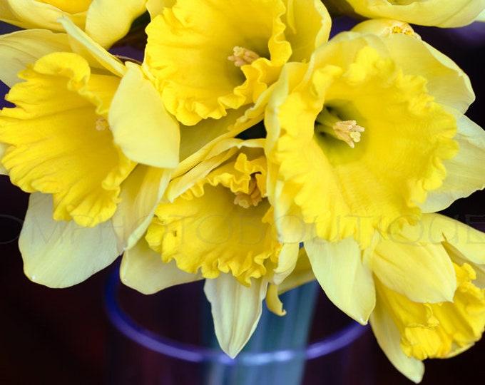 Daffodil Photo, Daffodil Print, Flower Photo, Flower Photography, Flower Art Print, Flower Artwork, Flower Decor For Wall, Wall Decor