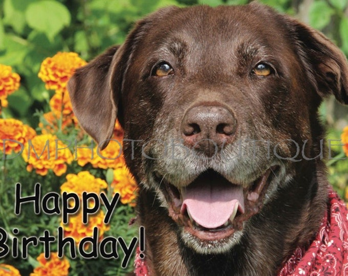 Labrador Retriever Birthday Card, Lab Birthday Card, Labrador Retriever, Lab, Brown Lab, Dog Card, Dog Birthday Card, Lab Lover, Dog Lover