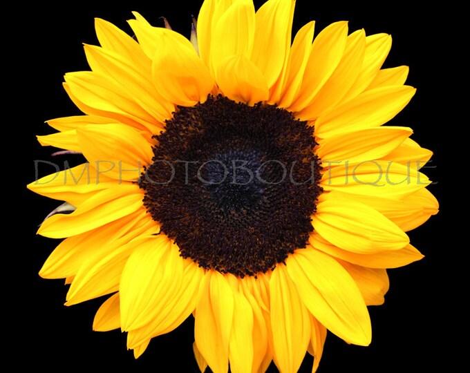 Sunflower Canvas, Sunflower Print, Sunflower, Sunflower Decor, Sunflower Wall Decor, Sunflower Wall Art, Sunflower Art, Sunflower Artwork