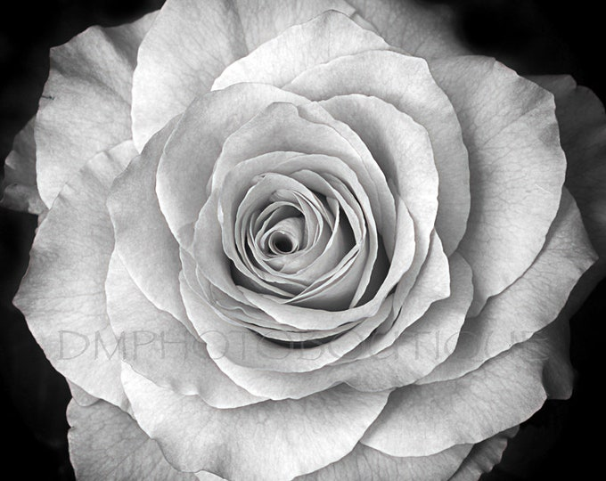 Black And White Rose Print, Rose Print, Rose Photo, Black And White Rose Photo, Notecards, Flower Photo, Wall Decor, Flower Art, Notecards