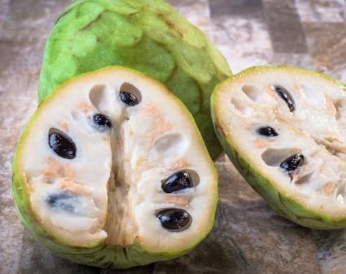 Honeyhart Cherimoya - 3  Feet Tall - Grafted Tree - Ship in 3 Gal Pot