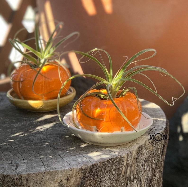 brown dish Pumpkin Planter