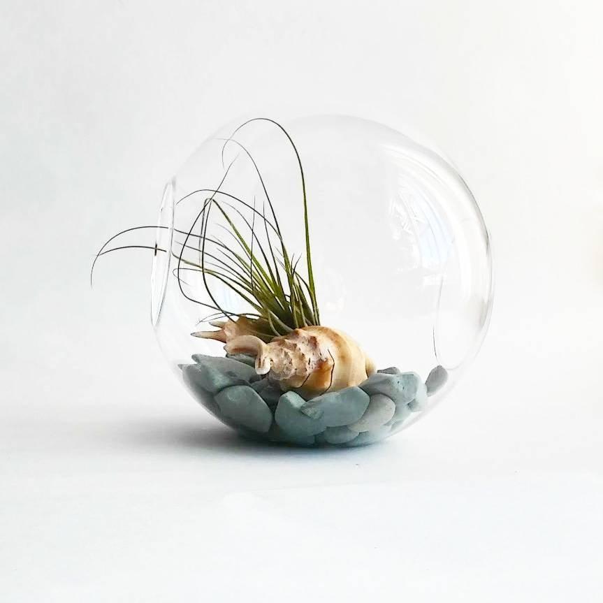 Beach Inspired Glass Globe Terrarium Air Plant Etsy