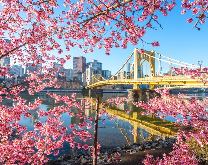 Pittsburgh Photograph - Pink Blossoms Surround the Warhol Bridge - Pittsburgh Art - Pittsburgh Metal Prints - Pittsburgh Photo Prints