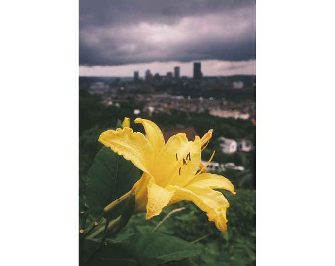 Pittsburgh Photo Print - Bright Yellow Flower and Stormy Skies  - Pittsburgh Wall Art - Pittsburgh Prints - Pittsburgh Metal Prints