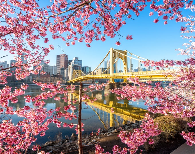 Pittsburgh Photograph - Beautiful Blossoms Around the Warhol Bridge - Pittsburgh Art - Pittsburgh Metal Prints - Pittsburgh Photo Prints