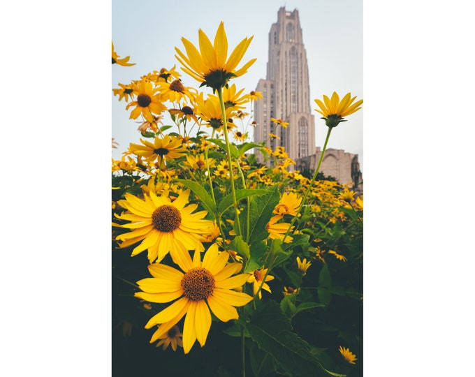Cathedral of Learning Photo - Flowers Surround the Cathedral of Learning  - Pitt Photo - Pittsburgh Prints - Pittsburgh Metal Prints