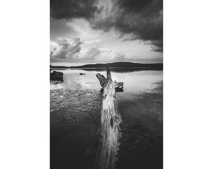Photograph of Tree in the Water - Log in Water Photo - Lake Arthur - Moraine State Park