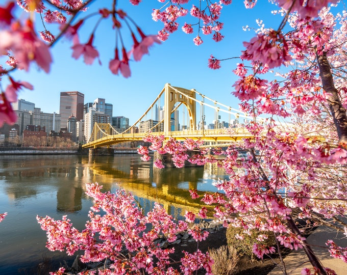 Pittsburgh Photo Print - Pink Blossoms Frame the Andy Warhol Bridge - Pittsburgh Art - Pittsburgh Metal Prints - Pittsburgh Photo Prints