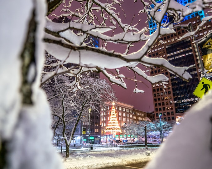 Pittsburgh Photo - The Horne's Christmas Tree Wrapped in a Snow Covered Tree - Pittsburgh Prints