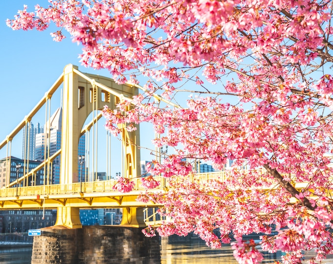 Pittsburgh Photo Print - Blooming Blossoms and the Andy Warhol Bridge - Pittsburgh Art - Pittsburgh Metal Prints - Pittsburgh Photo Prints