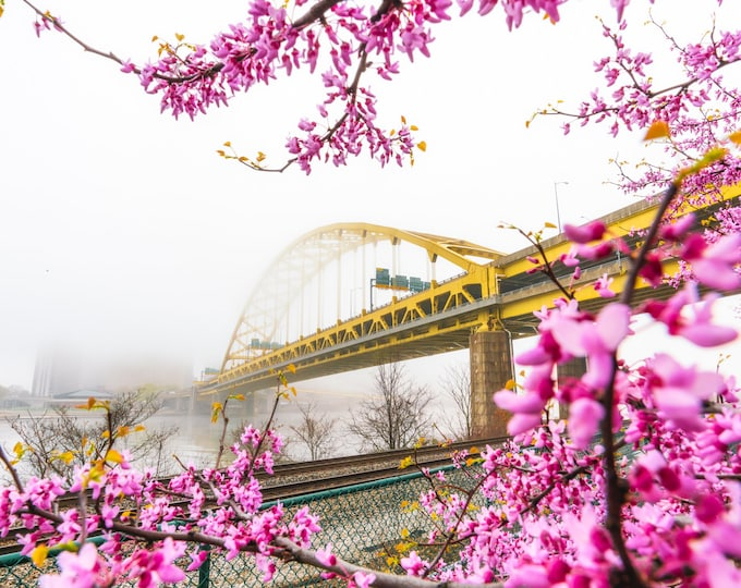 Pittsburgh Photo - Foggy Fort Pitt Bridge and Blosssoms - Pittsburgh Wall Art - Pittsburgh Metal Prints - Pittsburgh Canvas Prints