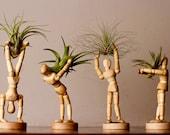x4 Mini Man Air Plant Holders plus x4 Unique Air Plants, Wooden Desktop Decor, Wooden Airplant Terrarium Housewarming Gift