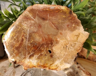 Petrifed Wood from Madagascar