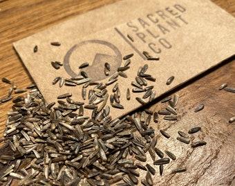 Maximilian's Sunflower Seeds | Prarie Sunflower Seeds | Maximillian sunflower Seeds | Michaelmas-daisy Seeds