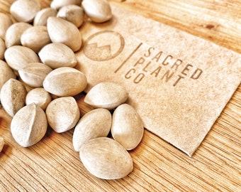 Gingko biloba Seeds | Maidenhair Tree Seeds | Ginkgo Seeds | Bulk Gingko biloba Seeds | Bulk Ginkgo Tree Seeds