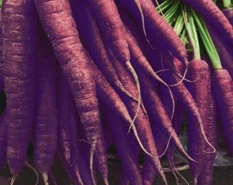 Black Carrot Seeds | Black Nebula Carrot Seeds | Daucus carota | Purple Carrot Plant Seeds | Bulk Purple Carrot Seeds