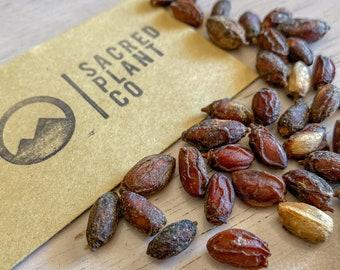 Neem Tree Seeds | Azadirachta indica Tree Seeds |  Medicinal Neem Tree Seeds | Neem Tree |