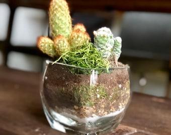 Glass Terrarium Layered Handmade Stone Cactus Living Etsy