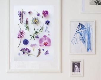 Purple flowers, floral print, botanical print, garden flowers, nursery art, Australian natives, passionfruit, orchid, cornflower