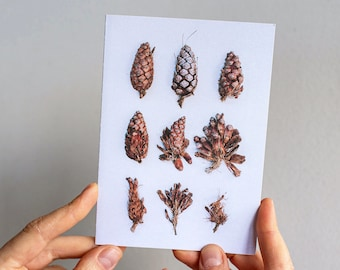 Pinecones greeting card  — A collection of pinecones