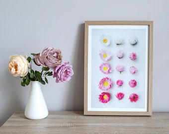 Everlastings say goodnight floral print — A collection of Western Australian daisies