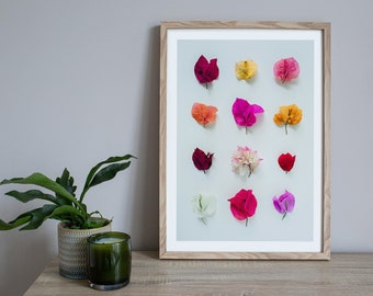 Bougainvillea print, Australian flora, floral print, botanical print, flowers collection, card for her, card for mum, wall art
