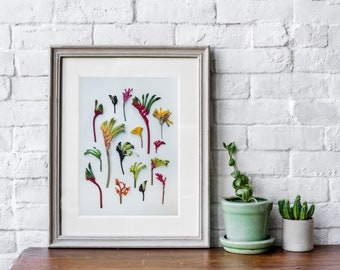 Hello kangaroo paws floral print  — A collection of Western Australian native wildflowers