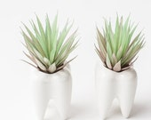 Set Of Two Teeth Ceramic Planters, Succulent Planter Pots, Dentist Gifts, Teeth Flower Plant Containers, Tooth Planter, Tooth Fairy Planters