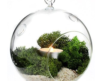 Large Glass Terrarium Etsy