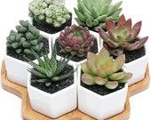 7 Hexagon Ceramic Planters With Bamboo Tray, Geometric Planters, Ceramic Succulents Pot Sets, Planter Pots, Flowerpots with Bamboo Tray