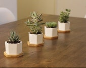 Set of 3 or 4 or 6 Succulent Planter Pots With Bamboo Tray, Small White Ceramic Hexagon Containers, Cactus Planters, Flower Pots