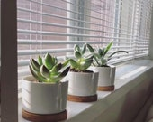 SET OF 3, 4 Or 6 White Cermaic Planters With Bamboo Trays, Flower Pots, Mini Succulent Planters, Desktop Planters, Succulent Containers