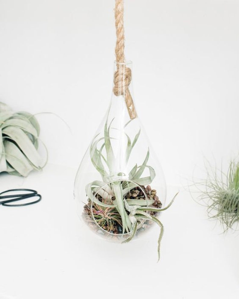 Hanging Rope Planter Glass Terrarium Glass Rope Planter Etsy