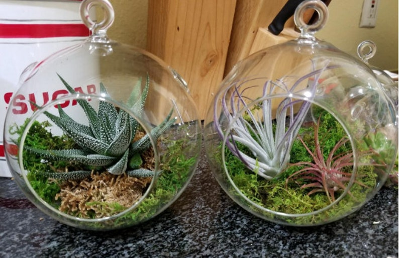 Pack Of 2 Hanging Orb Planters Globe Plant Terrarium Glass Etsy