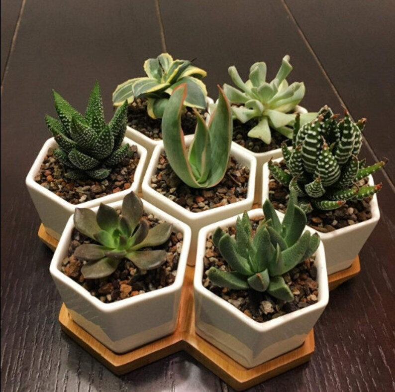 7 Hexagon Ceramic Planters With Bamboo Tray, Geometric Planters, Ceramic  Succulents Pot Sets, Planter Pots, Flowerpots with Bamboo Tray