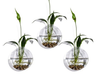 Set of 3 Bubble Terrariums, Glass Wall Mounted Vase, Hydroponic Vases,  Glass Terrariums, Moss Planters, Wall Garden Decoration