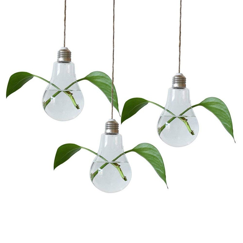 Sale 3 Pack Hanging Light Bulb Plant Terrarium Terrarium Etsy