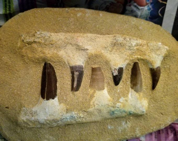 Monasaur Teeth